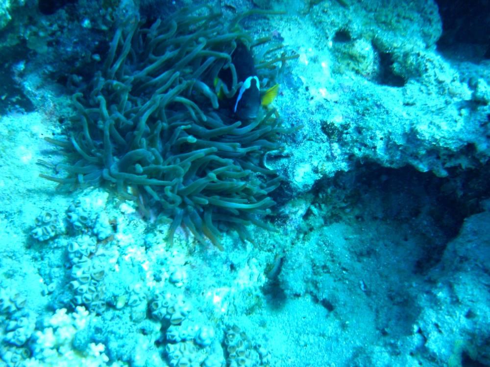 diving-in-red-sea-aqaba-jordan