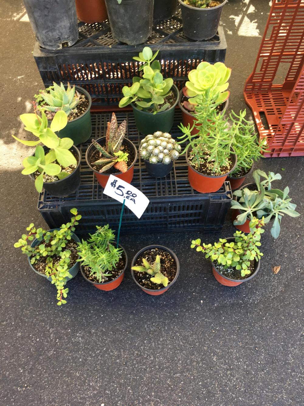 succulents-hollywood-farmers-market