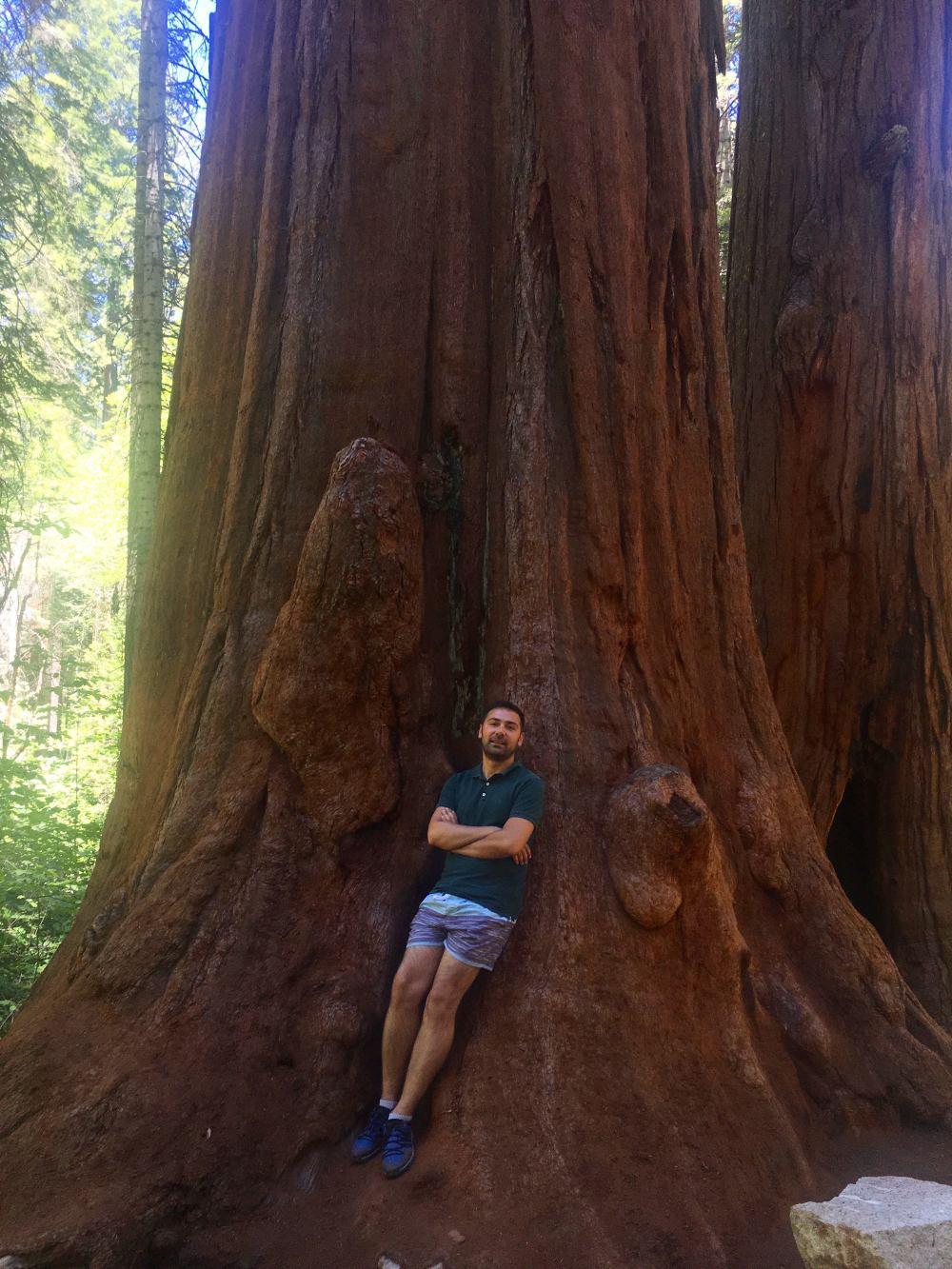 yosemite-sekoya-ağaçları-2