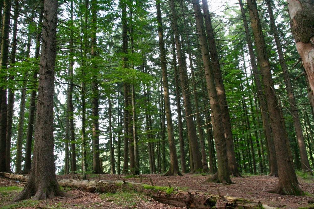 #poianabraşov #orman #forest #romanya