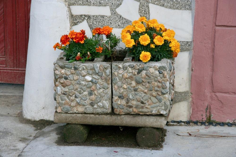 #romanya #sibiel #flowers #çiçek